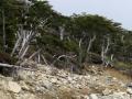 Rough trail. (Torres Del Paine)