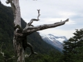 The Warning Tree. Go back!