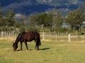 Patagonian splendor. (Lago General Carrera)